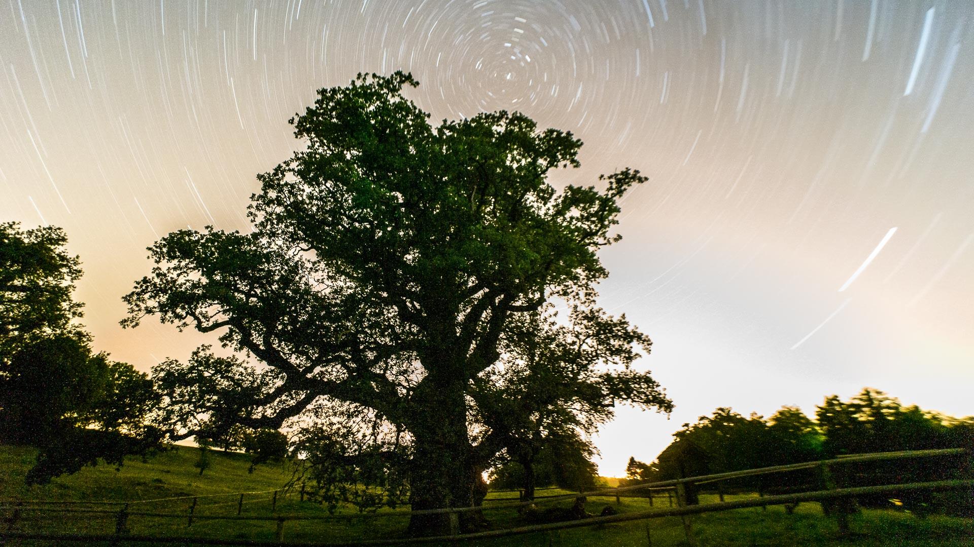 album blog arbre