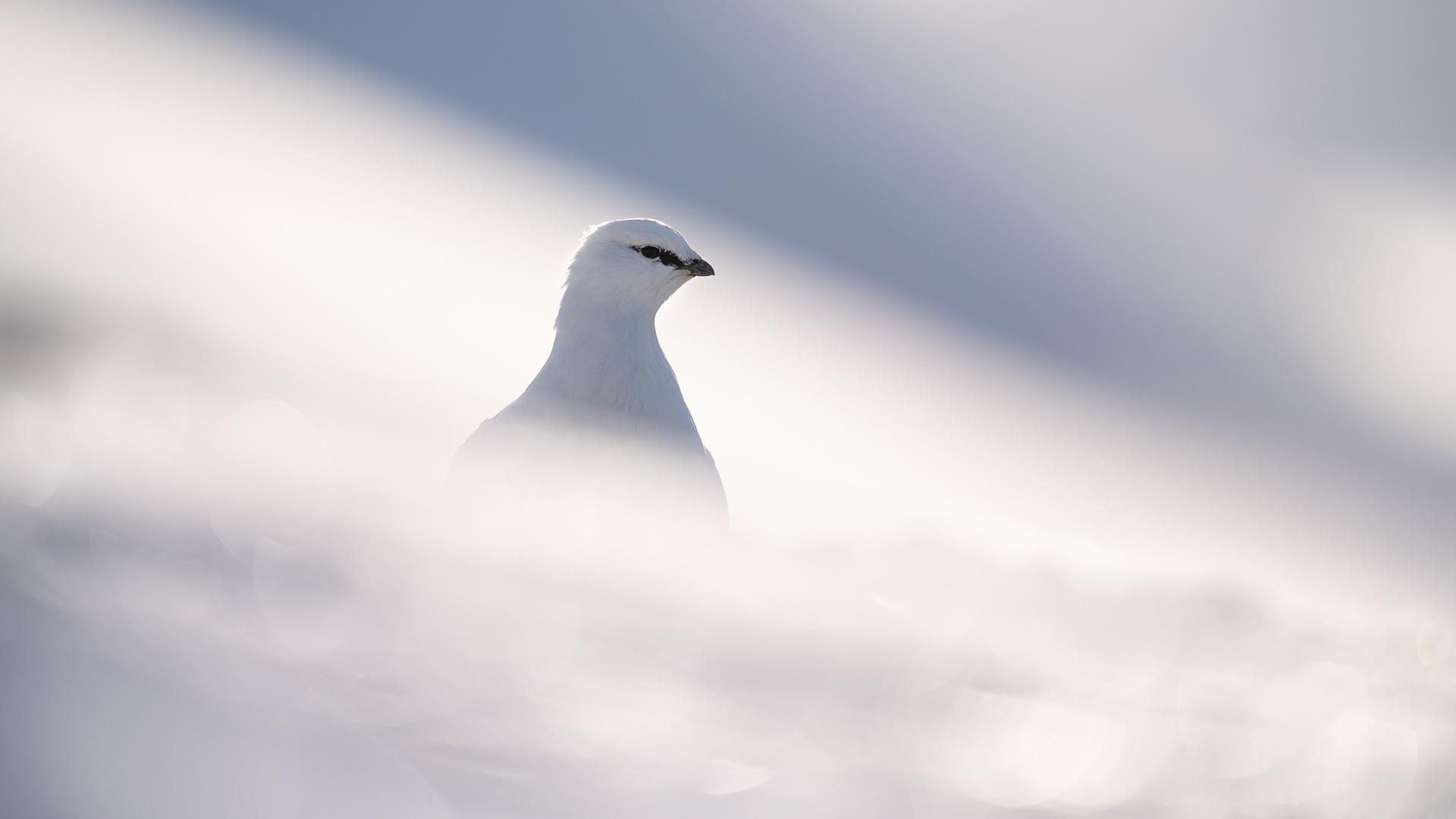 album blog Svalbard